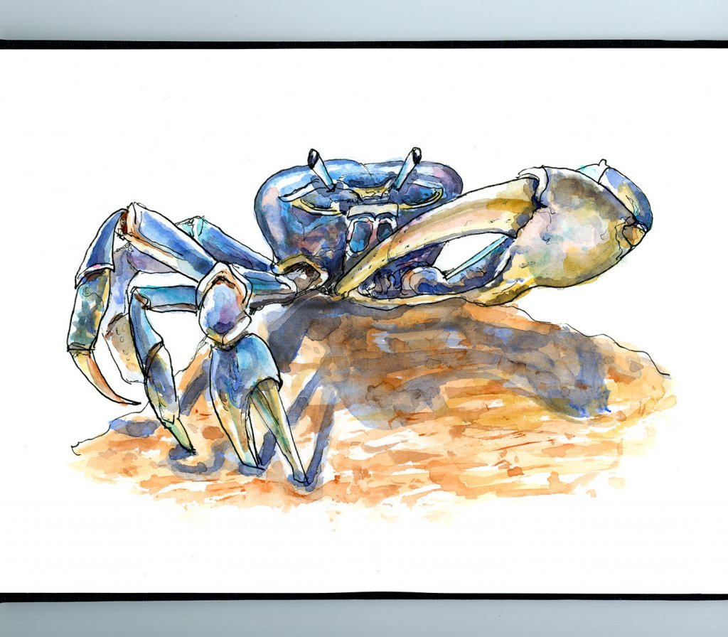 Blue Crab On Beach Watercolor Illustration Sketchbook Detail