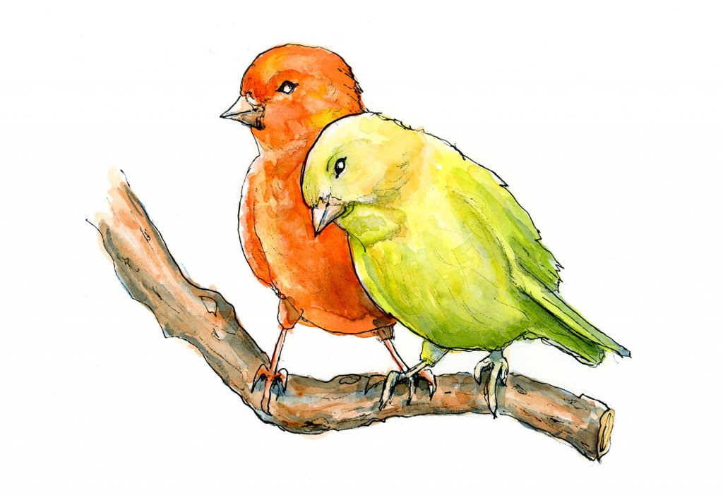 Red And Yellow Canary Watercolor Painting