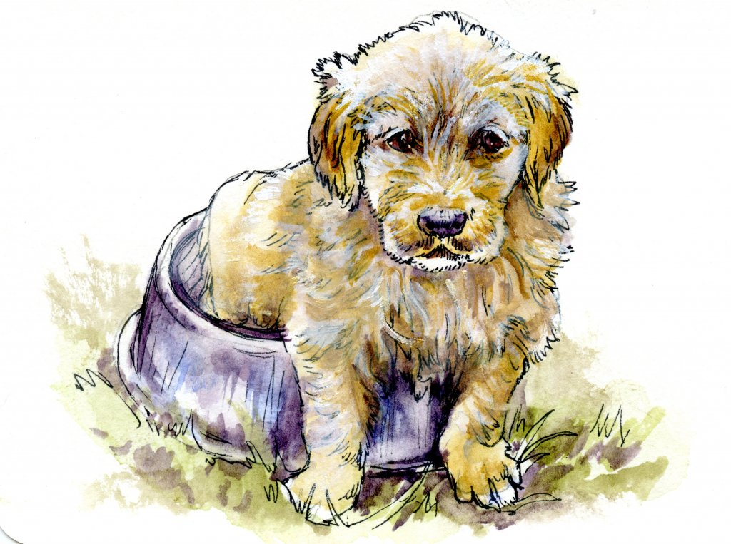 Did you know that you can tell what color a golden retriever puppy will be as an adult, by looking a