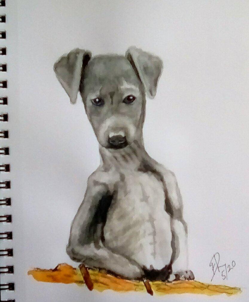 """Watercolor challenge """"Grey Hound"""" IMG_20200512_083750_kindlephoto-588512225"""