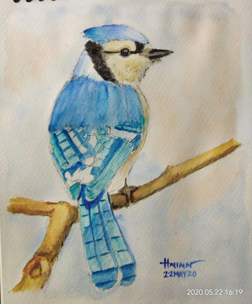 #doodlewashMay2020 #WorldWatercolorGroup #Beginner #22 #BlueJay #22May2020🎉 IMG_20200522_161