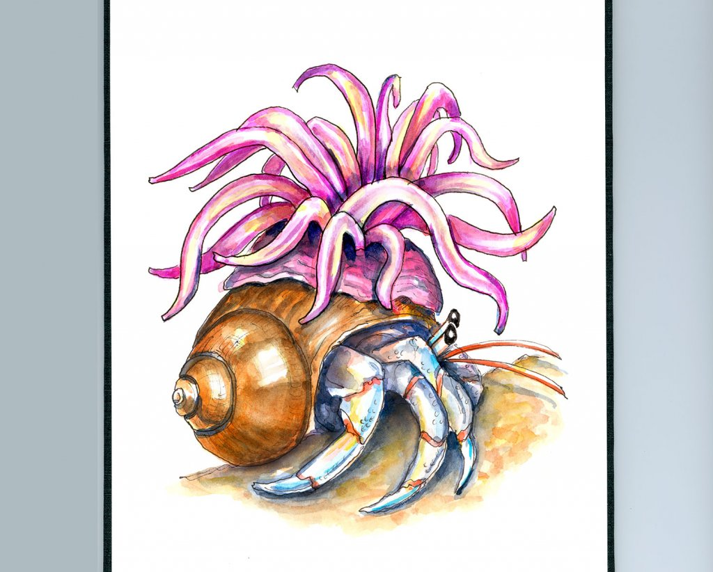 Hermit Crab And Sea Anemone Watercolor Painting Illustration Sketchbook Detail