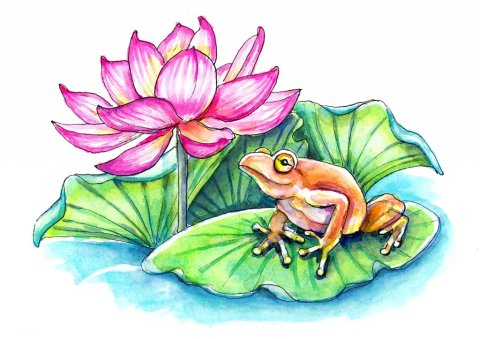 Lotus Flower And Frog Watercolor Painting Illustration