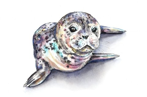 Seal Baby Harbor Seal Pup Watercolor Painting Illustration