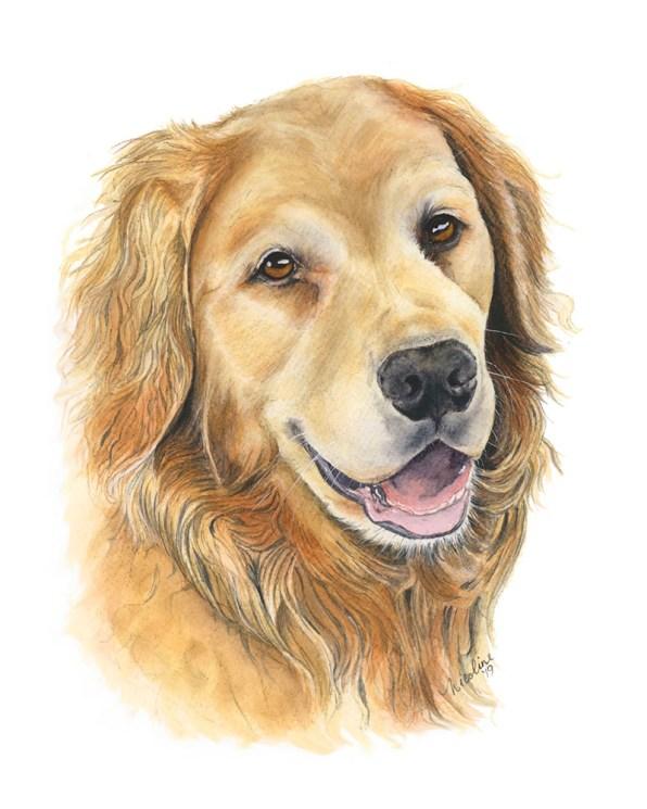 Dog Pet Portrait Cooper Watercolor Painting