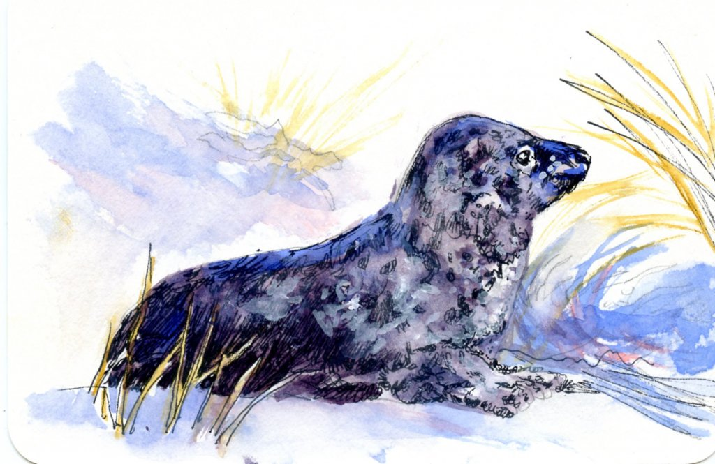 Did you know that the Leopard Seal is a predator second only to the Orca? They eat fish, bird, pengu