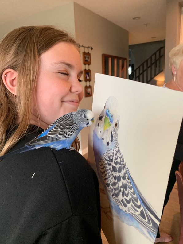 Parrot Looking At Watercolor Painting Of HImself