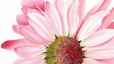 chrysanthemum Watercolor Painting by Disha Sharma