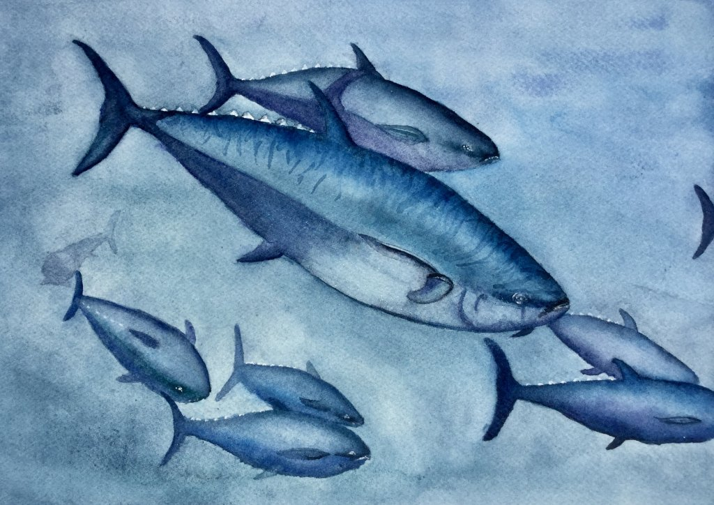 School of white fleshed tuna fish. Painted to honour this species which for many centuries has susta