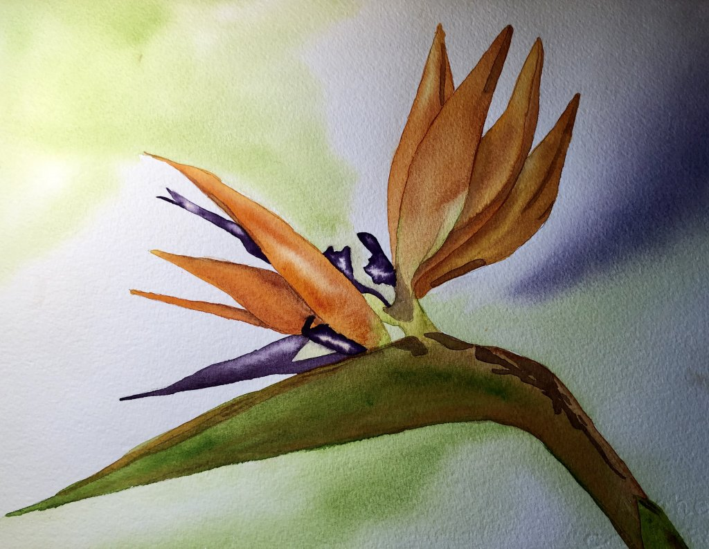 Day 28 The orange and purple in the Bird of Paradise are two of my favorite complementary colors. Bi