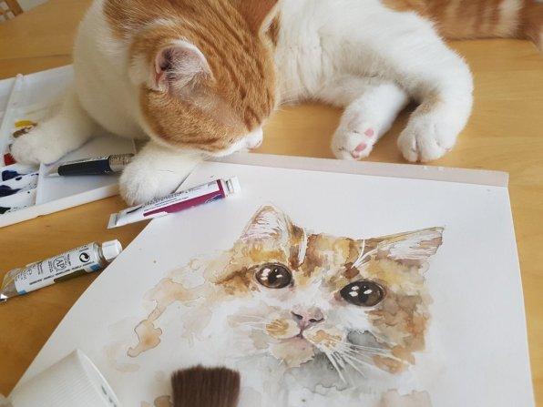 Cat Watercolor Aquarelle Painting by Jitka Zajíčková