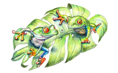 Two Tree Frogs On Monstera Leaf Watercolor Painting Illustration