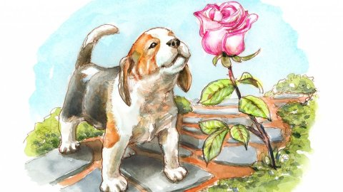 Puppy Dog Smelling The Roses Watercolor Painting Illustration