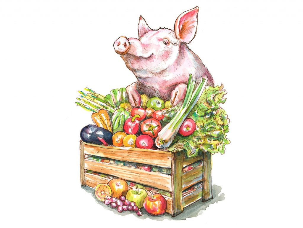 Pig Vegetables Crate Abundance Watercolor Painting Illustration