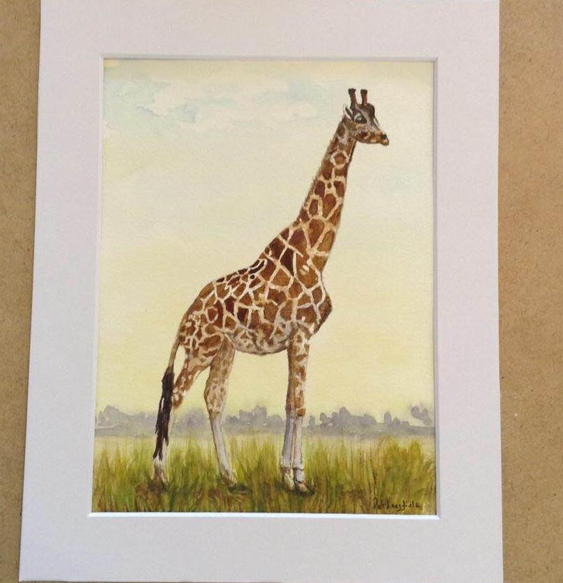 Giraffe from Yorkshire Wildlife Park, Doncaster Giraffe