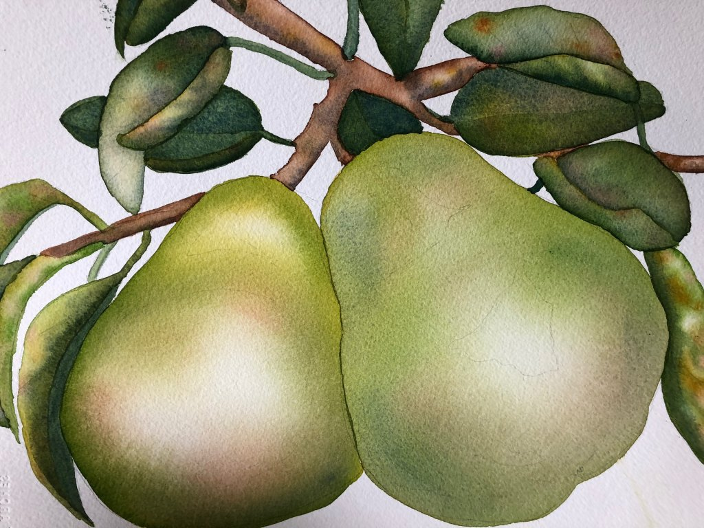 Day 9 Fruit: Pears from California IMG_3606