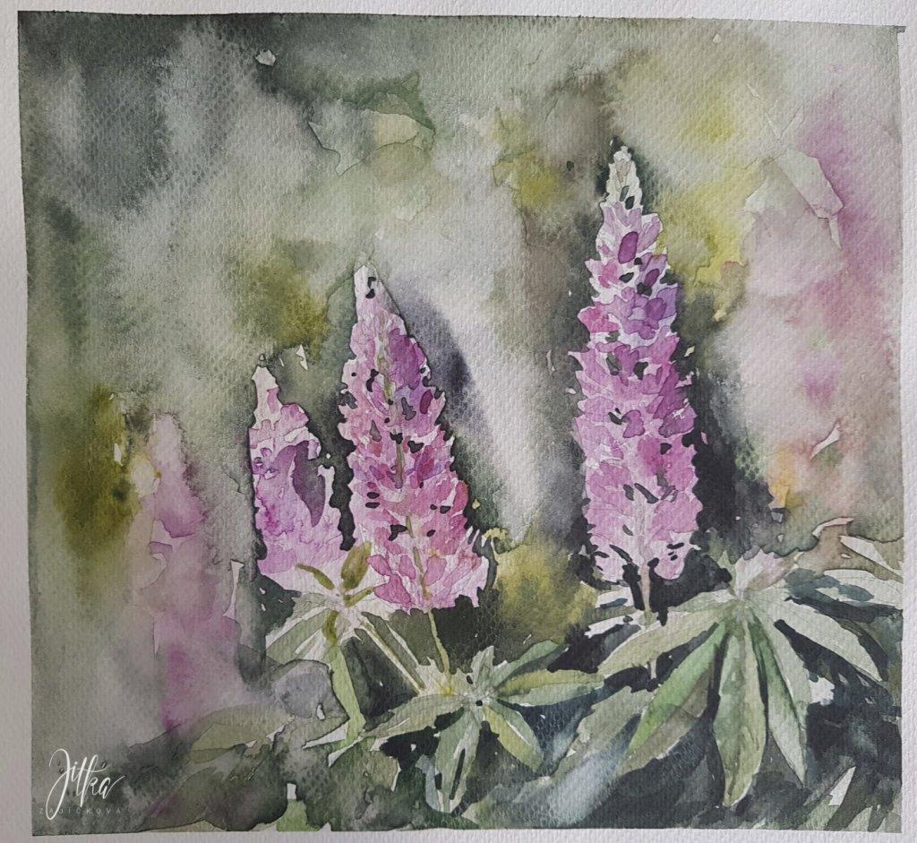 Lupina Watercolor Aquarelle Painting by Jitka Zajíčková