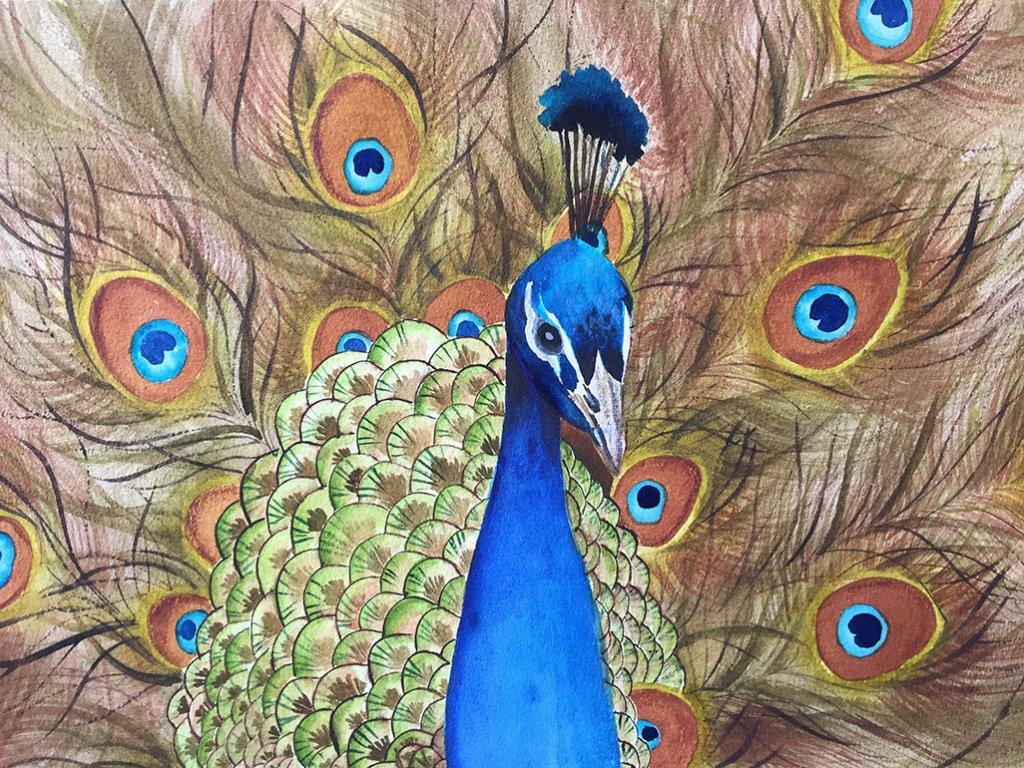 Michelle Gonzalez Watercolor Painting Peacock