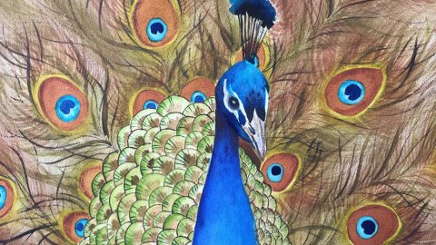 Michelle Gonzalez Watercolor Painting Peacock