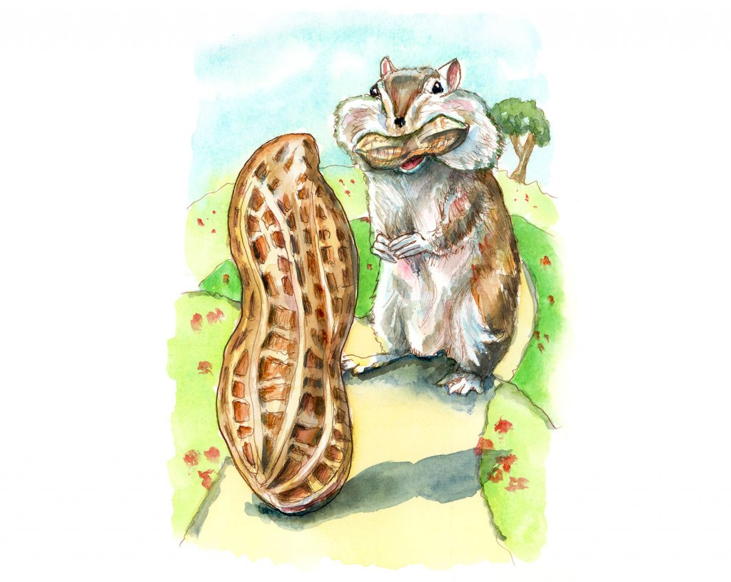 Chipmunk Eating Peanuts Cheeks Watercolor Painting Illustration