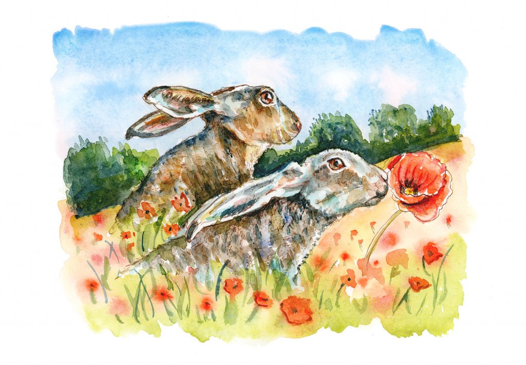 Hares In Poppy Field Rabbits Watercolor Painting Illustration