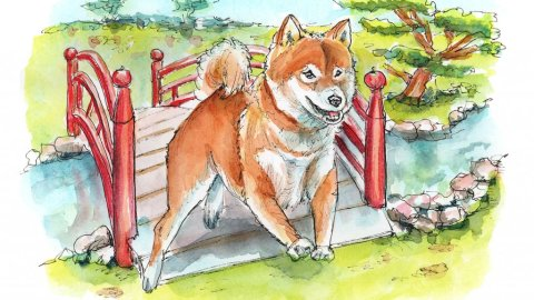 Shiba Inu Japanese Bridge Watercolor Painting Illustration