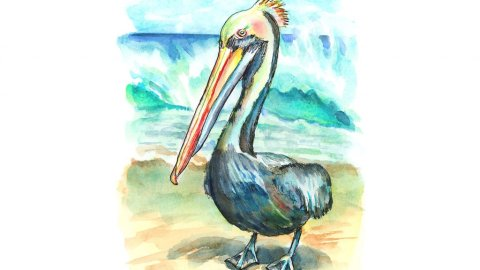 Peruvian Pelican On Beach Watercolor Painting Illustration