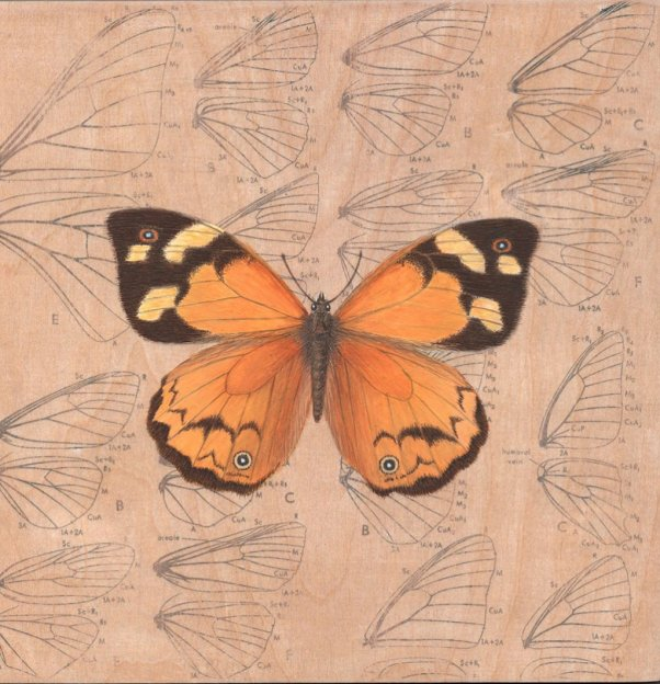 common brown butterfly painting by Cheryl Hodges