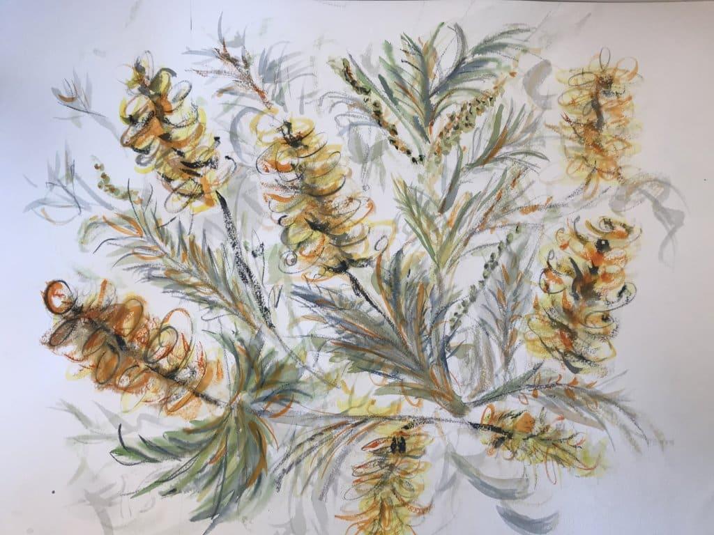 The grevilleas are flowering 💕 341763AD-6F9D-428B-A30C-1FB6E734866E