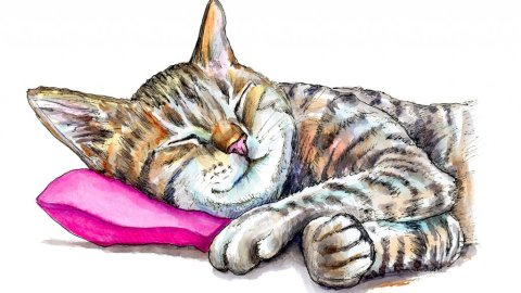 Tabby Cat Sleeping Watercolor Painting Illustration