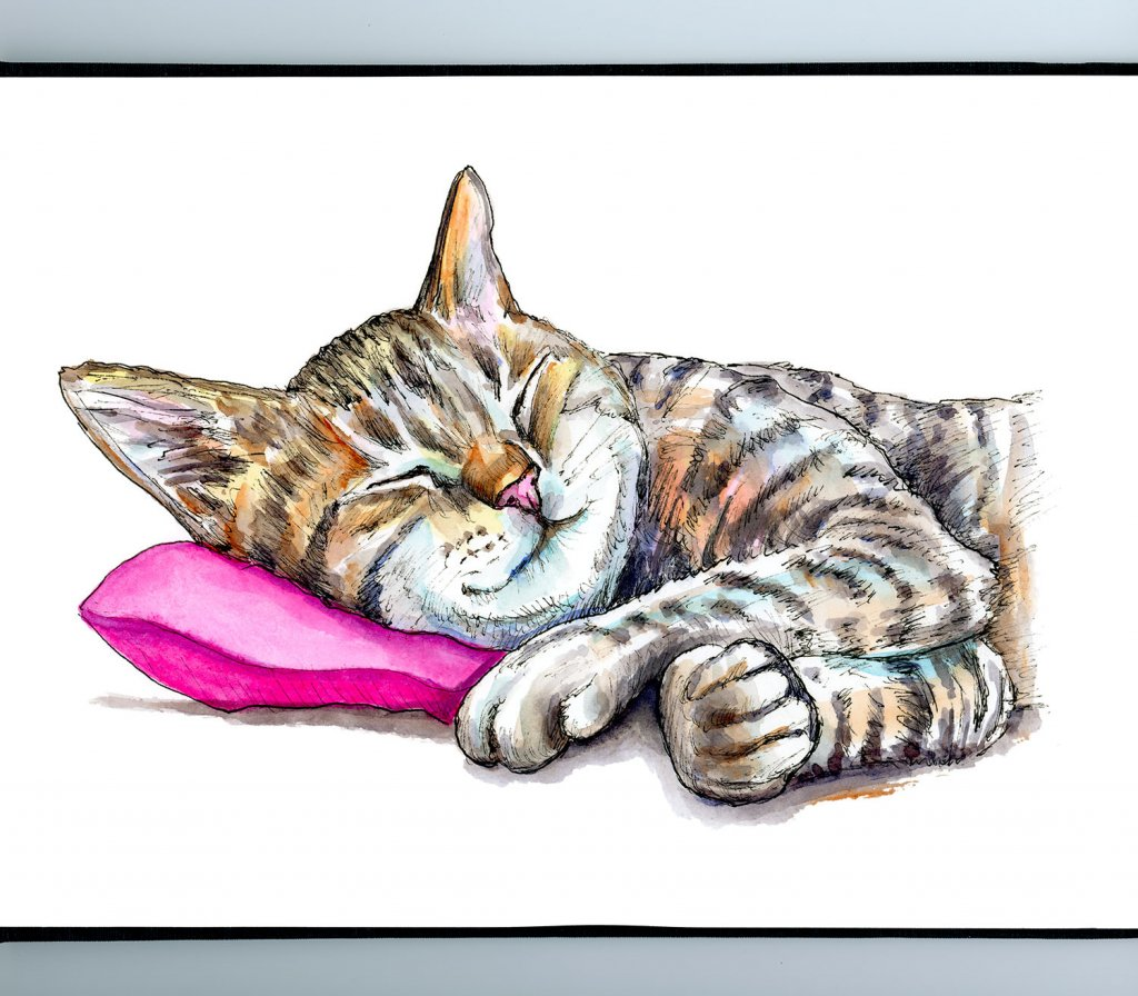 Tabby Cat Sleeping Watercolor Painting Illustration Sketchbook Detail