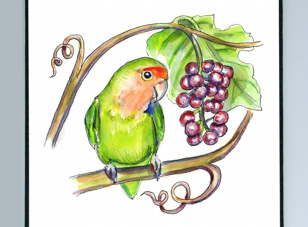 Rosy Peach Faced Lovebird Grapes Watercolor Painting Illustration Sketchbook Detail