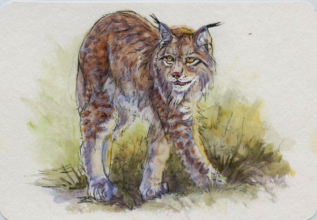 Prompt: Cold. Did you know the Lynx is perfectly adapted for cold, snowy weather with luxurious fur,