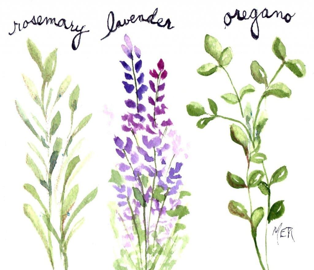 11/22/20 Herbs 11.22.20 Herbs img008