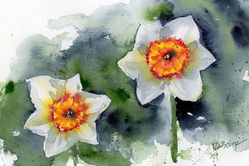 Two White Daffodils studio watercolor painting by Kris DeBruine