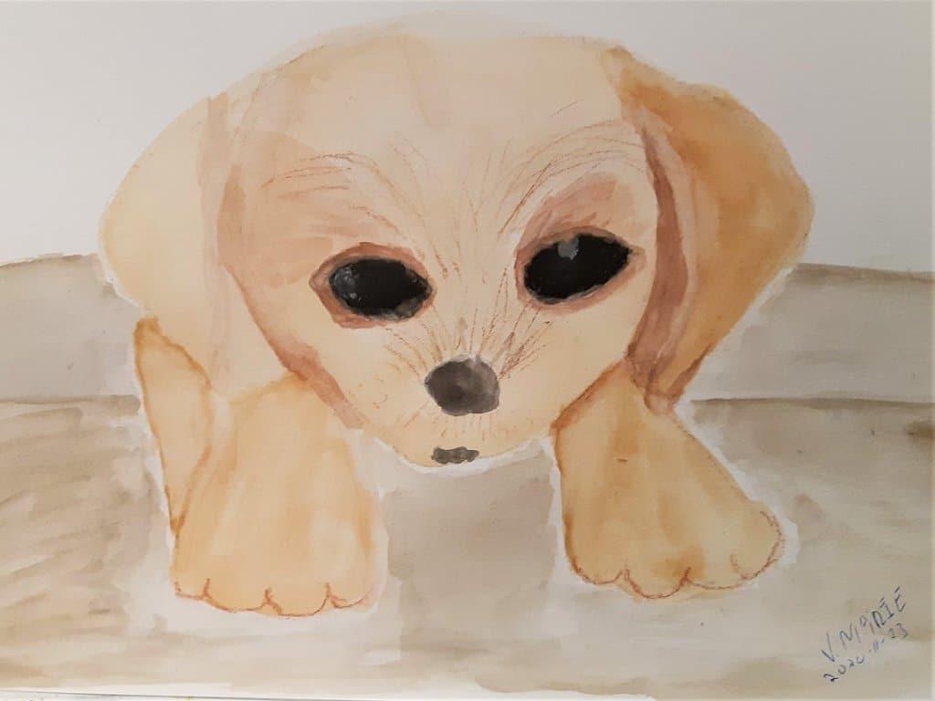 #doodlewashNovember2020 20201123_curious-puppy
