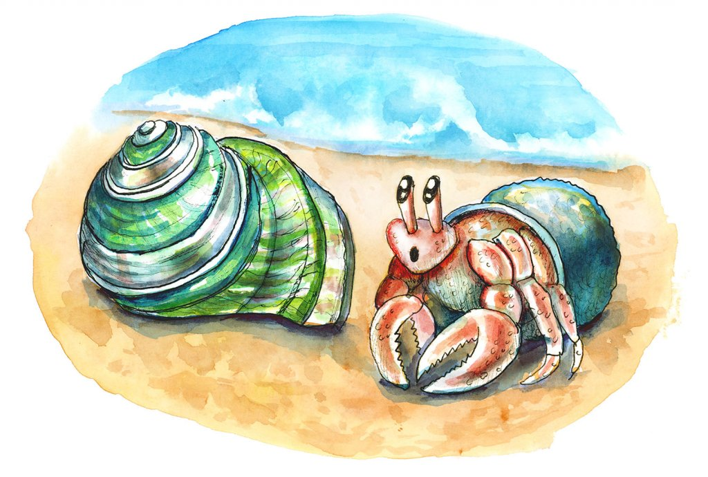 Hermit Crab Finding New Green Turban Shell On Beach Watercolor Illustration Painting