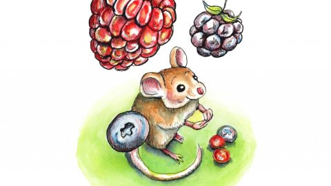 Falling Berries Mouse Watercolor Illustration Painting