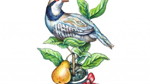 Partridge In A Pear Tree Watercolor Illustration Painting