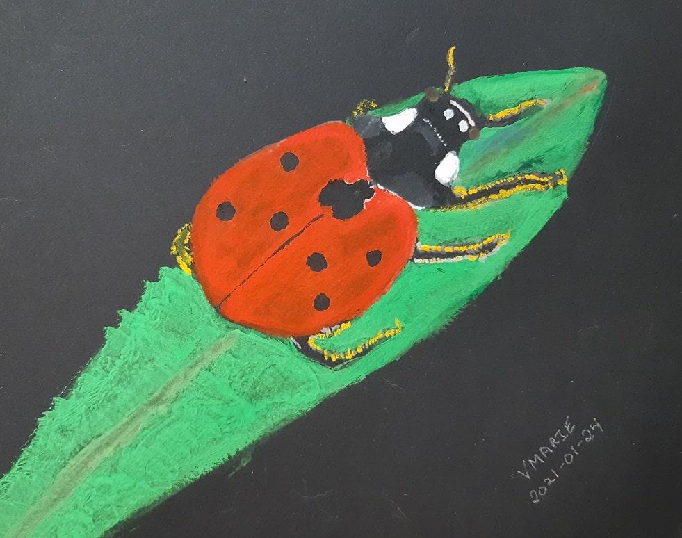 2021-01-24 Small. Coccinella septempunctata or seven-spotted ladybug. (Wikipedia. Creative Commons A