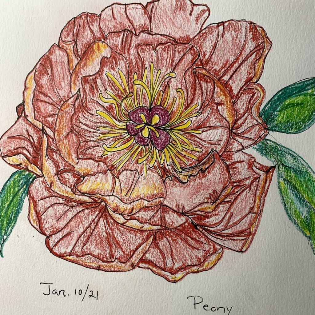 My art this week. Line drawing of a peony, abstract flowers with collage, family portrait with water