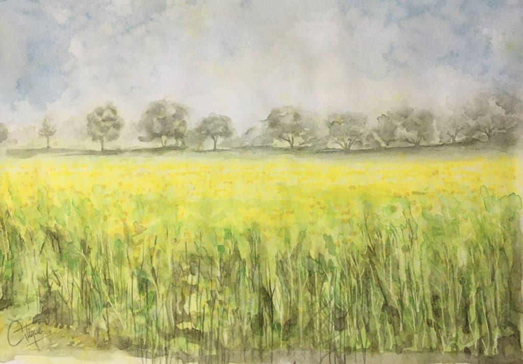 Mustard Field…. IMG_1919