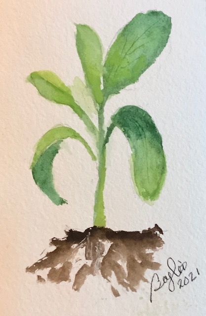 #doodlewashjanuary2021: day 14 sprouts: This is a basil plant – time for some good Italian spa