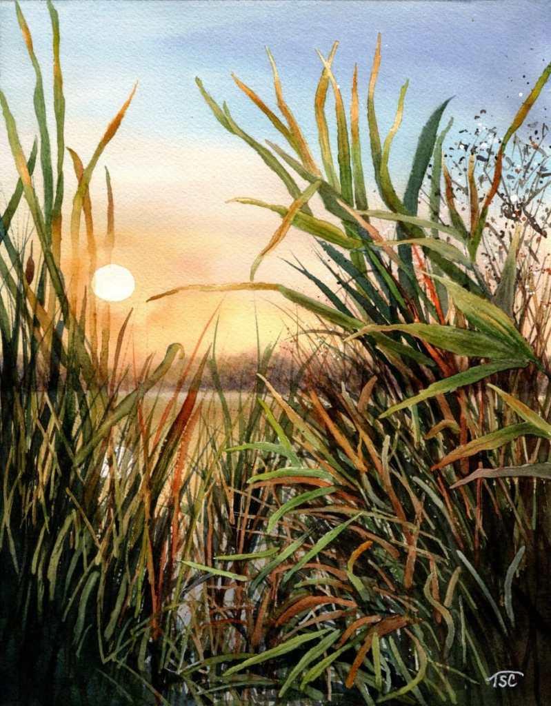 Marsh Grasses (PMP ref.) 5.