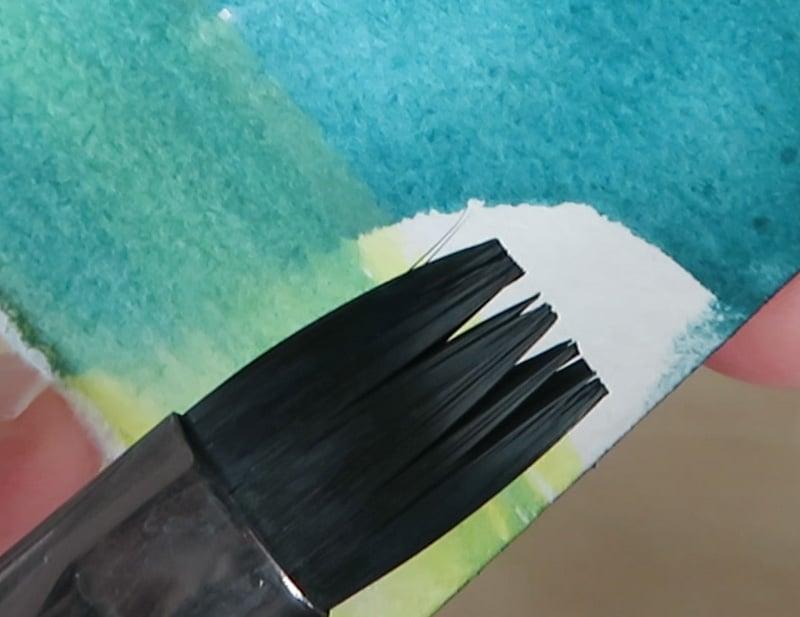 Closeup of Black Tulip Flat Brush