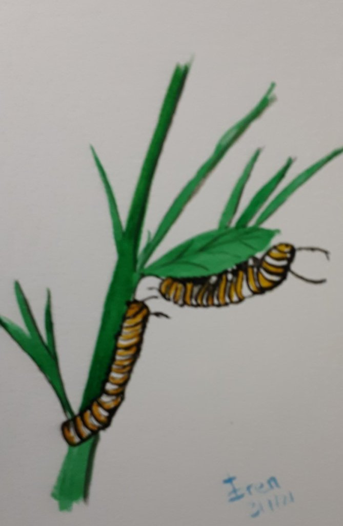 I will do better on next prompt (I hope). Here's my CATERPILLAR 20210301_082514