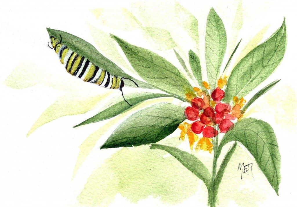 3/1/21 Caterpillar 3.1.21 Caterpillar img001