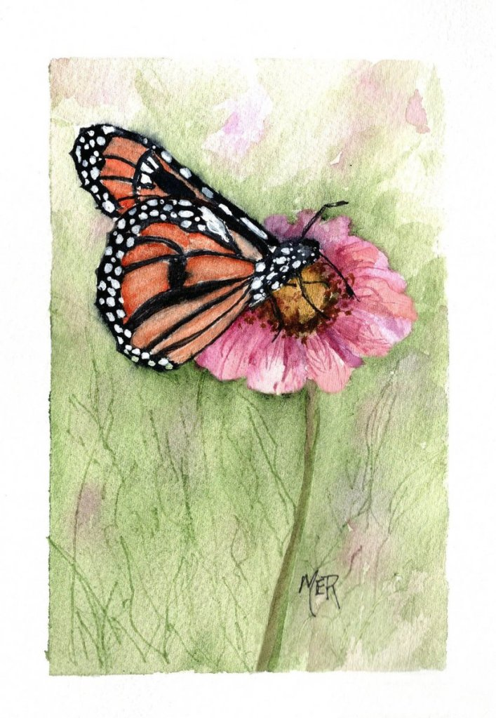 3/6/21 Monarch 3.6.21 Monarch img001