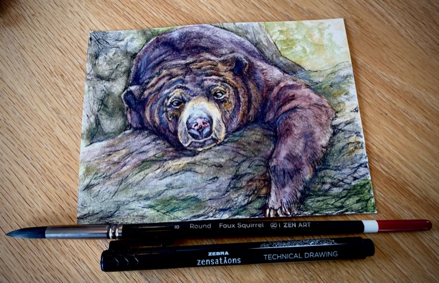 Did you know that despite its name, the Sun Bear is nocturnal? Artwork: Zebra Zensations Technical P