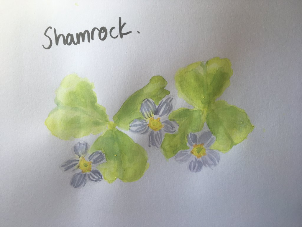 just a few SHAMROCKS for St. Patrick's Day IMG_1261